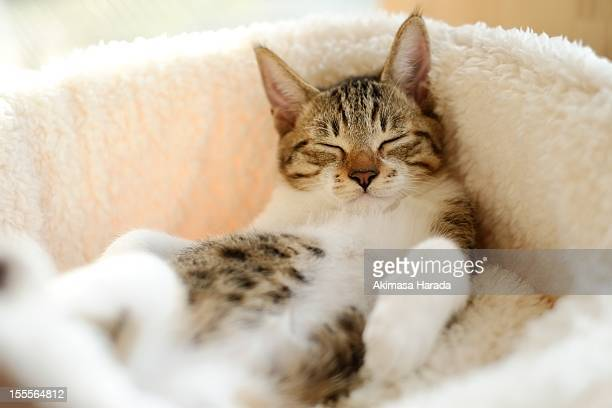 kitten unexploited comfortably