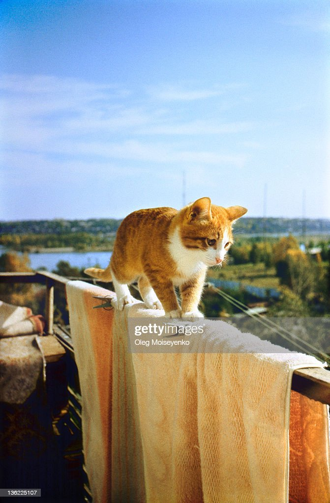 Kitten walks on balcony : Stock Photo
