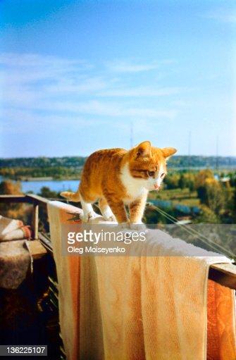Kitten walks on balcony : Stock Photo