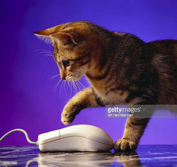 Kitten with computer mouse