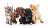 Kittens and puppies isolated on a white background.