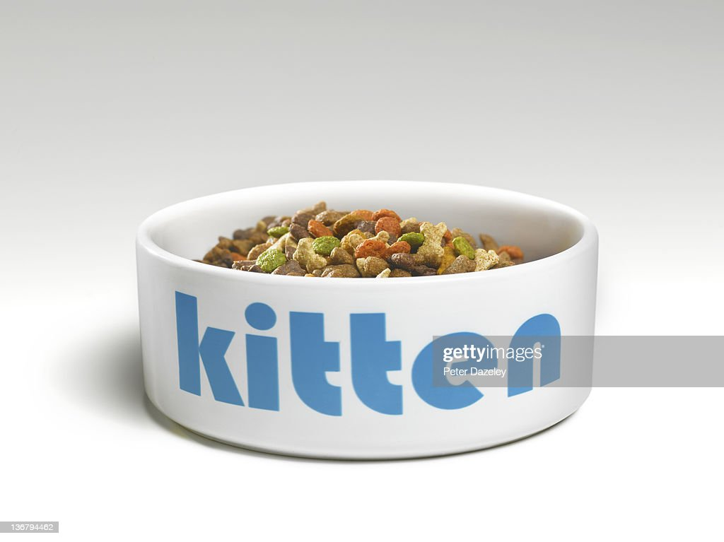 Kitten's feeding bowl with food : Stock Photo