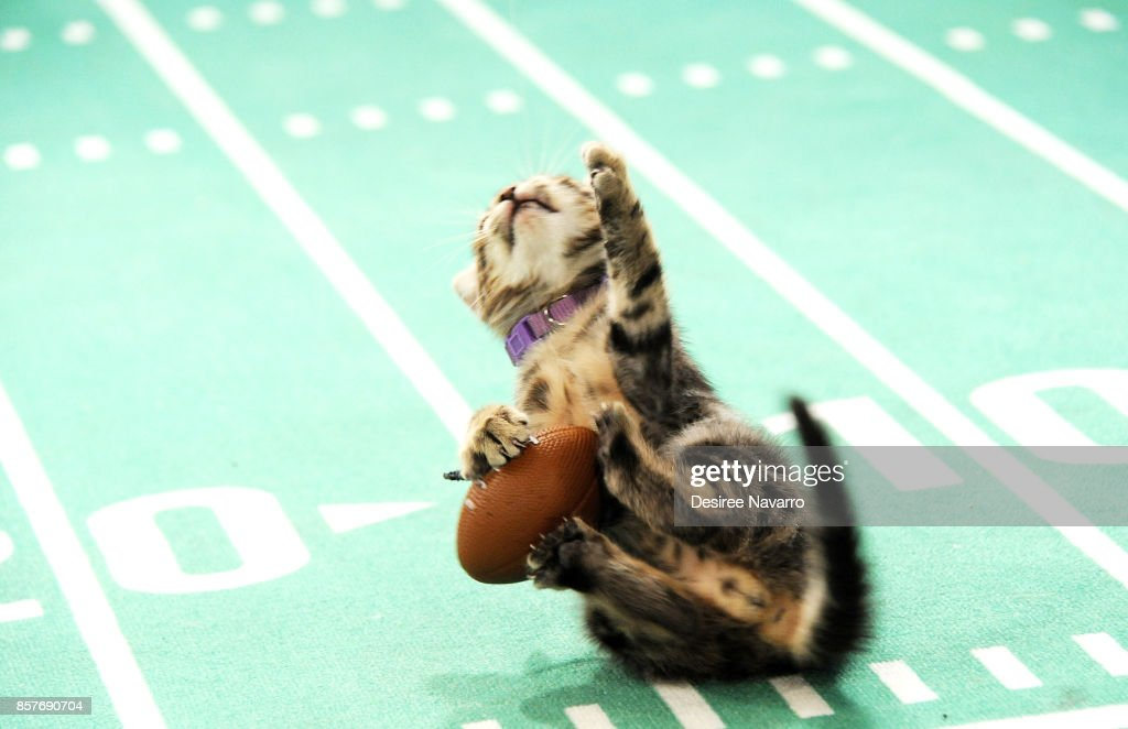 Kittens from North Shore Animal League America and recent rescued from Hurricane Irma play on the football field during Kitten Bowl V on October 4, 2017 in New York City.