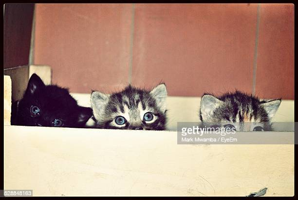 Kittens Hiding In Box