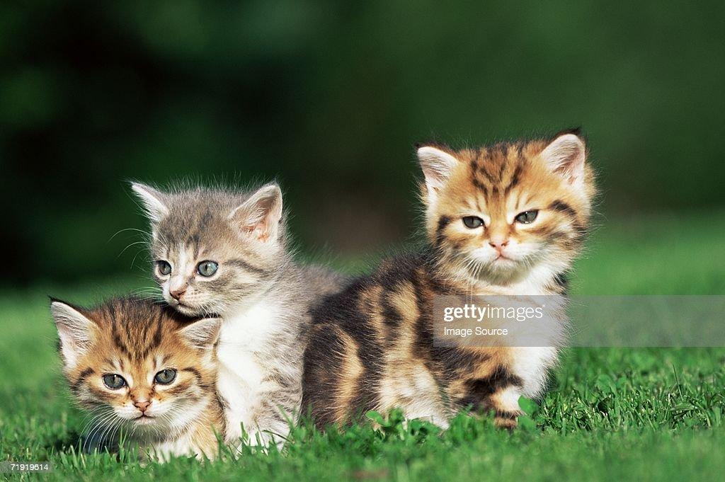 Kittens in a field : Stock Photo