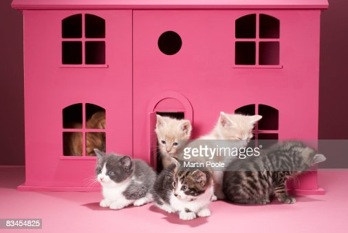 Kittens in doll's house