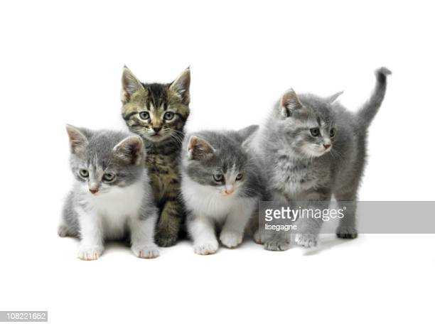 Kittens Isolated on White