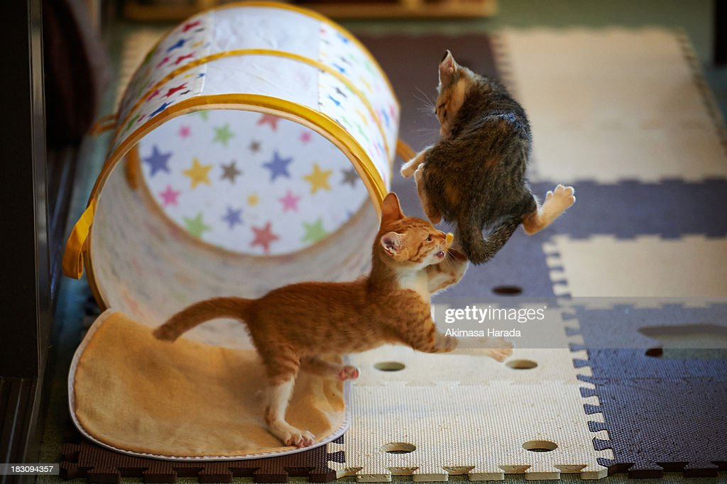kittens playing together : Stock Photo