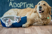 "A golden retriever and two kittens are sitting in a home after a pet adoption. The word ""adoption"" is written the chalkboard wall."