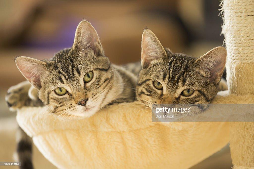 Kittens sitting in cat tree : Stock Photo