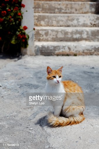 Kitty at Akrotiri Village