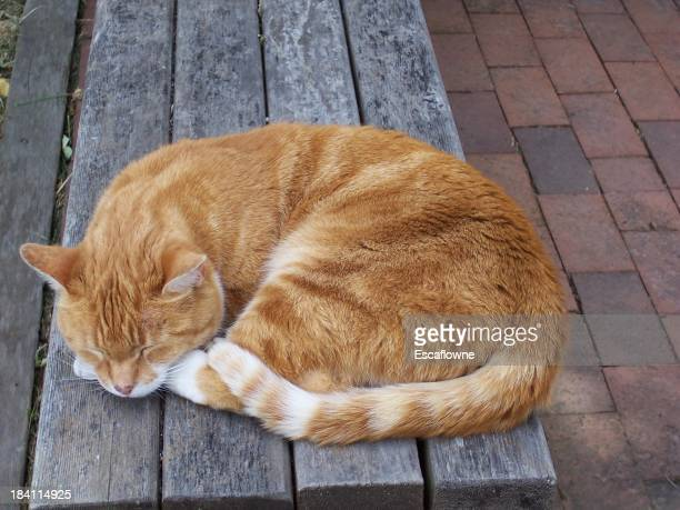 Kitty dormir sur un banc de musculation