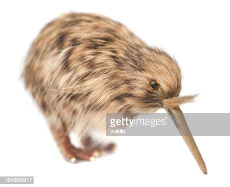 kiwi bird : Bildbanksbilder