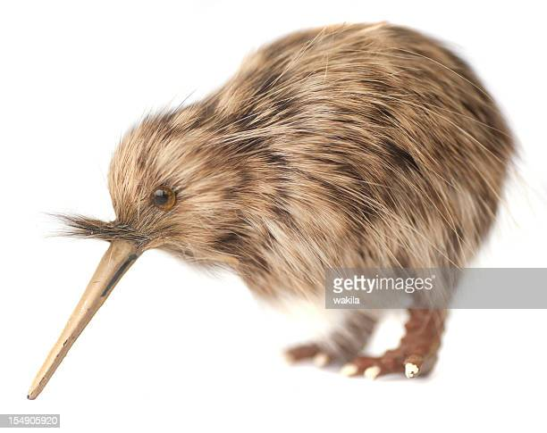 kiwi bird stock photos and pictures  getty images, Beautiful flower
