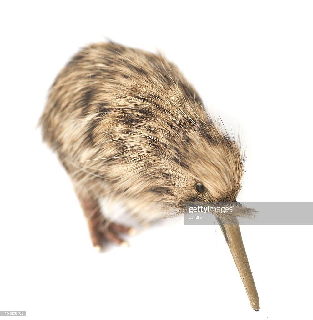 kiwi-bird : Stock-Foto