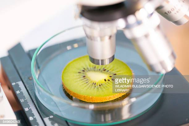 Kiwi fruit being examined