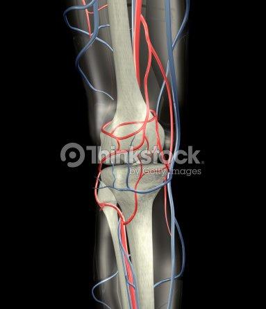 Knie Knochen In Venen Und Arterien Xxl Stock-Foto | Thinkstock