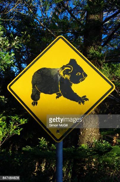 Koala crossing warning road sign, Flynns Beach, Port Macquarie, New South Wales, Australia