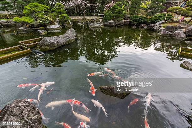 Koi Carp Pond at Shiosai Garden once a part of the Hayama Imperial Villa Shiosai Teien is a traditional Chisen Kaiyu Shiki Japanese strolling pond...