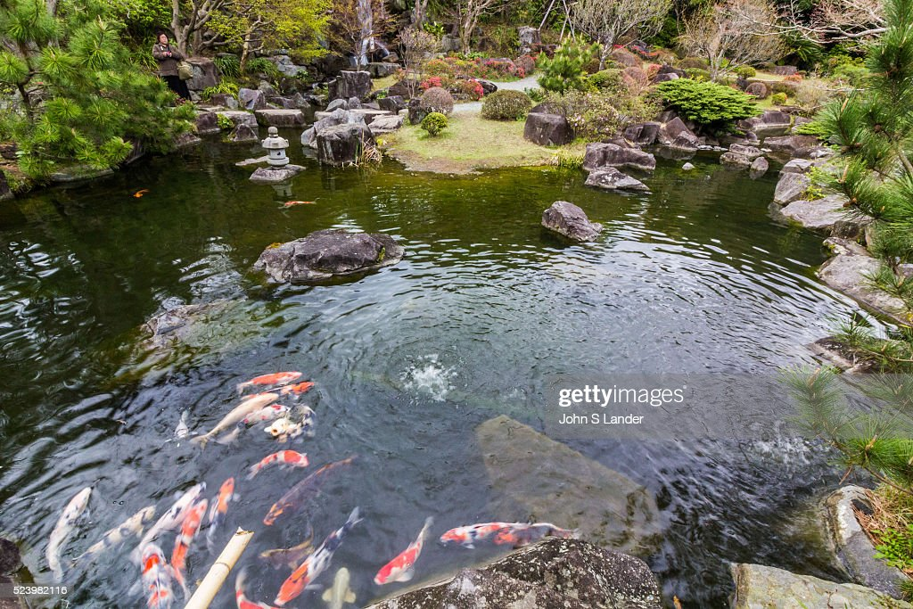Koi Pond at Shiosai Garden once a part of the Hayama Imperial Villa Shiosai Teien is a traditional Chisen Kaiyu Shiki Japanese strolling pond garden...