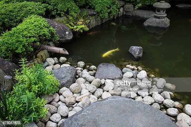 Koi ponds are ponds used as part of a landscape pond garden Classic koi ponds have Nishikigoi Japanese ornamental carps The design of the koi pond...