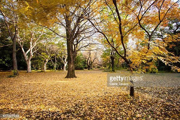 Koishikawa Botanical Garden, Tokyo in autumn.