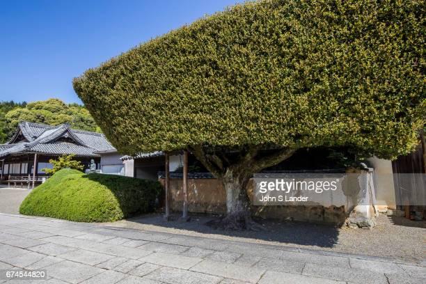 Kokawadera Temple Garden was created by Ueda Soko a Sengoku warrior and master of tea ceremony The garden at Kokawadera is designated as a national...