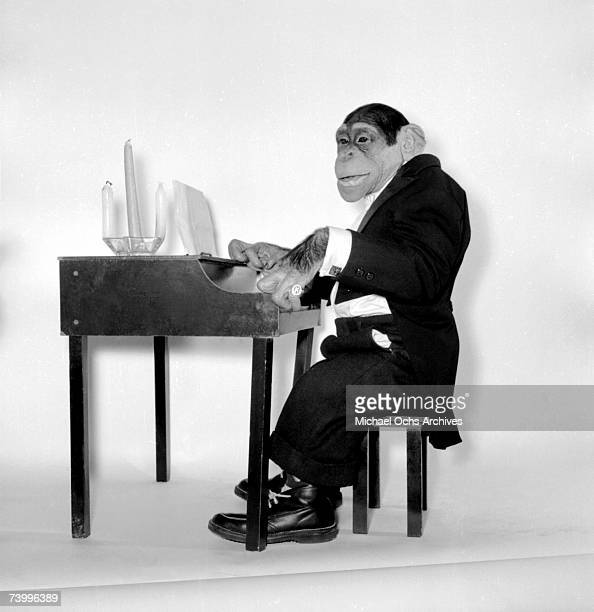 Kokomo Jr the talented chimpanzee poses for a portrait session wearing a tuxedo and playing a miniature piano in circa 1960