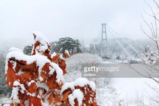 Kokonoe 'Yume' Otsurihashi suspension bridge : Stock Photo