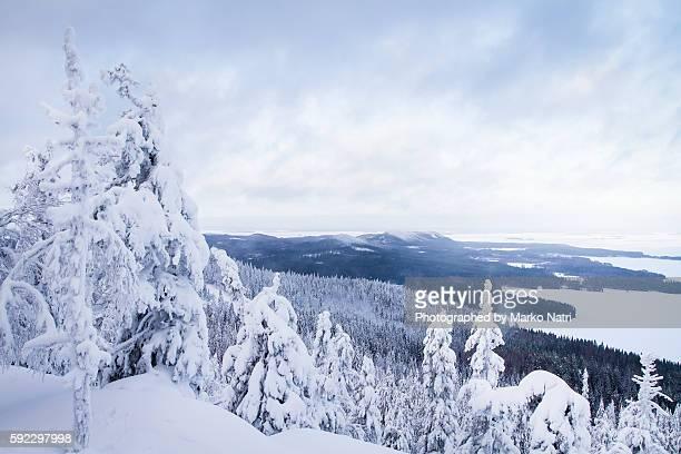 Koli winter landscape
