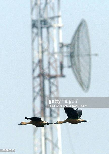 A flock of migratory birds fly past a radio communication tower beside Santragachi Wetlands on the outskirts of Kolkata 20 February 2006 India's best...