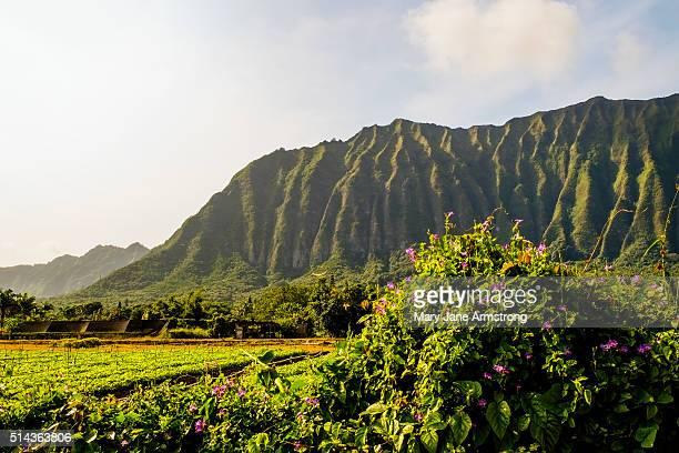 Ko'oalu Mountains