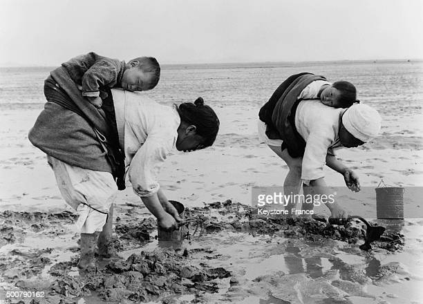 Korean women gathering clams on the beach with babies asleep on back on August 6 1963 in South Korea