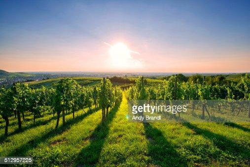 Kraichgau Vineyard (Germany)
