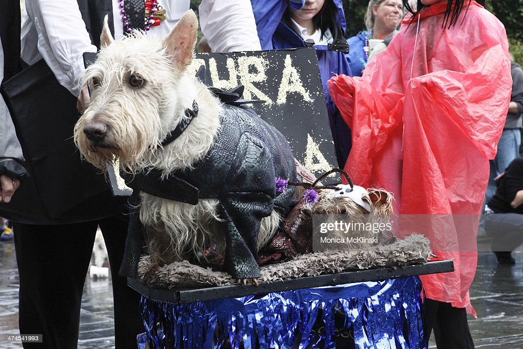 A krewe member marches with The Mystic Krewe of Barkus, a non-profit organization that supports animal welfare groups on February 23, 2014 in New Orleans, Louisiana. DOGZILLA - Barkus Licks the Crescent City was the theme of the 22nd Mystic Krewe of Barkus Parade.