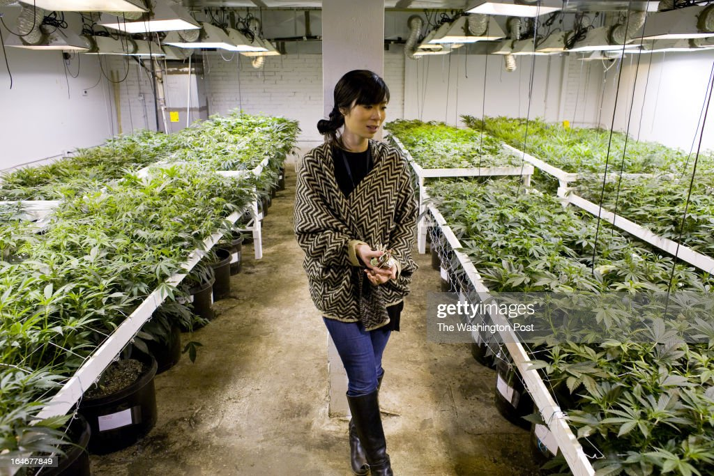 Kristi Kelly inside a medical cannabis cultivation facility in Denver, Colorado, U.S., on Monday, March 4, 2013. This is inside a warehouse in Denver, and is one of the facilities that Kristi Kelly, Co-Founder of Good Meds Network, operates.