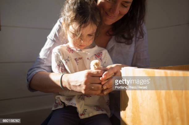Kristie Green helps her daughter Iris Milliken hold one of the baby chicks that was shipped from a hatchery in Missouri along with 19 others The...