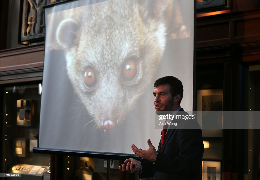 Kristofer Helgen, curator of mammals at the Smithsonian's National Museum of Natural History, speaks as he introduces olinguito, a new species of Carnivore he and his team have newly discovered August 15, 2013 at the Smithsonian Castle in Washington, DC. It took Helgen and his team on a journey from museum cabinets in Chicago to cloud forests in South America to discover and confirm the new species of olinguito (Bassaricyon neblina), which has been mistakenly identified for more than 100 years. It's also the first carnivore species to be discovered in the American continents in 35 years.