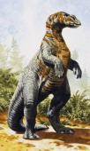 Kritosaurus sp Hadrosauridae Late Cretaceous Illustration