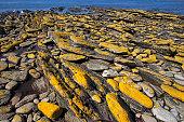 Kuestenlandschaft auf Carcass Island Falkland