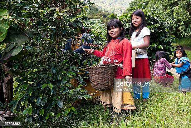 Children harvesting coffee in Central America