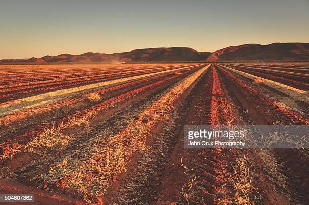Kununurra agriculture