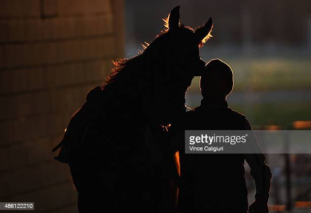 Kuro from the Anthony and Lee Freedman stable after a Moonee Valley trackwork session at Moonee Valley Racecourse on September 1 2015 in Melbourne...