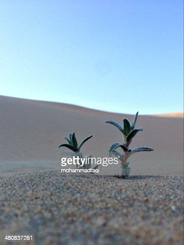 Kuwait, Spring Sign : Stock Photo