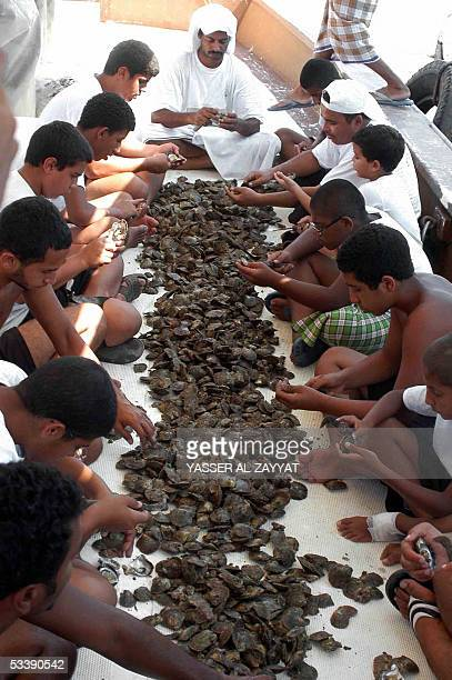 Kuwaiti divers look for pearls in shells they picked in the port of Khairan 100 kms south of Kuwait City 15 August 2005 Pearldiving trips are held...