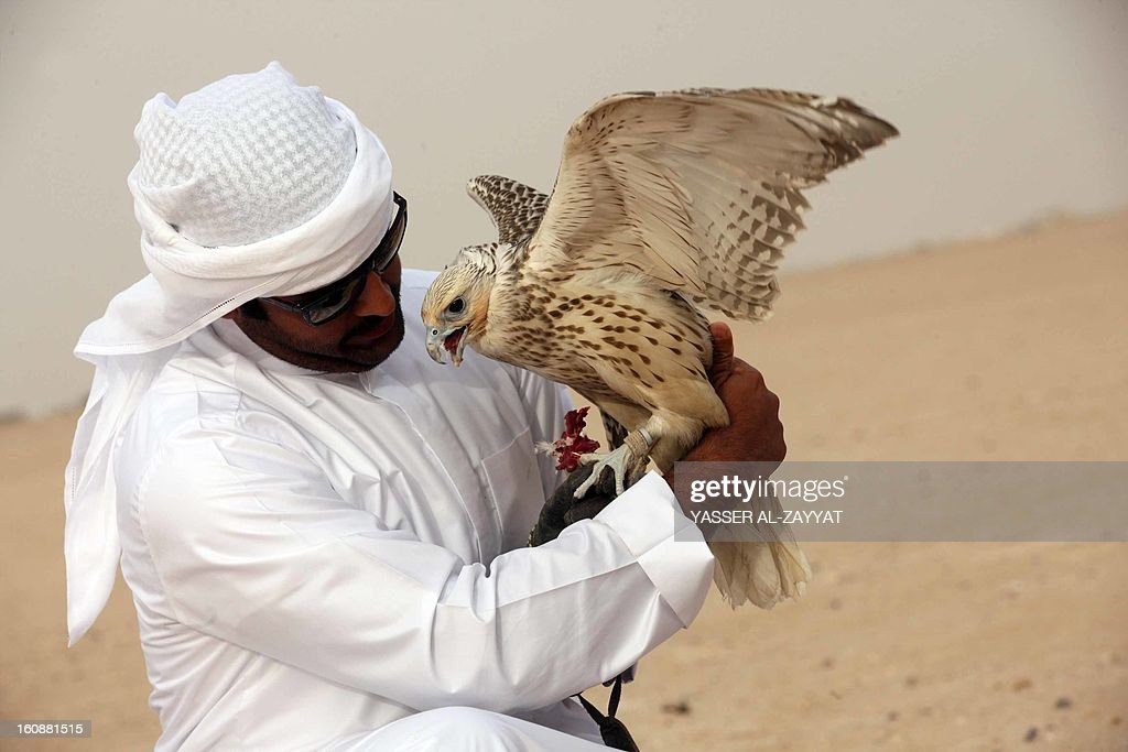 A Kuwaiti man holds his falcon during a competition in al-Salmi district, 120 kms west of Kuwait City on February 7, 2013, held as part of the ongoing Popular Heritage Festival. The one-month event is held annually to commemorate popular activities in Kuwaiti heritage, featuring camel races, falcons contests, fishing competitions and others. AFP PHOTO/YASSER AL-ZAYYAT