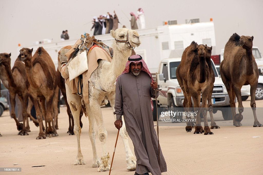 A Kuwaiti man stand leads a flock of camels during a competition in al-Salmi district, a desert area 120 kms west of Kuwait City, on February 7, 2013, held as part of the ongoing Popular Heritage Festival. The one-month event is held annually to commemorate popular activities in Kuwaiti heritage, featuring camel races, falcons contests, fishing competitions and others.