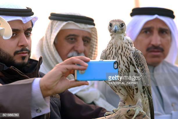 A Kuwaiti man takes a selfie with a falcon during a training session in alSalmi district 120 kms west of Kuwait City on December 19 2015 in...