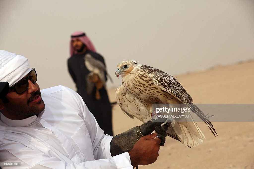 Kuwaiti men hold their falcons during a competition in al-Salmi district, 120 kms west of Kuwait City on February 7, 2013, held as part of the ongoing Popular Heritage Festival. The one-month event is held annually to commemorate popular activities in Kuwaiti heritage, featuring camel races, falcons contests, fishing competitions and others.