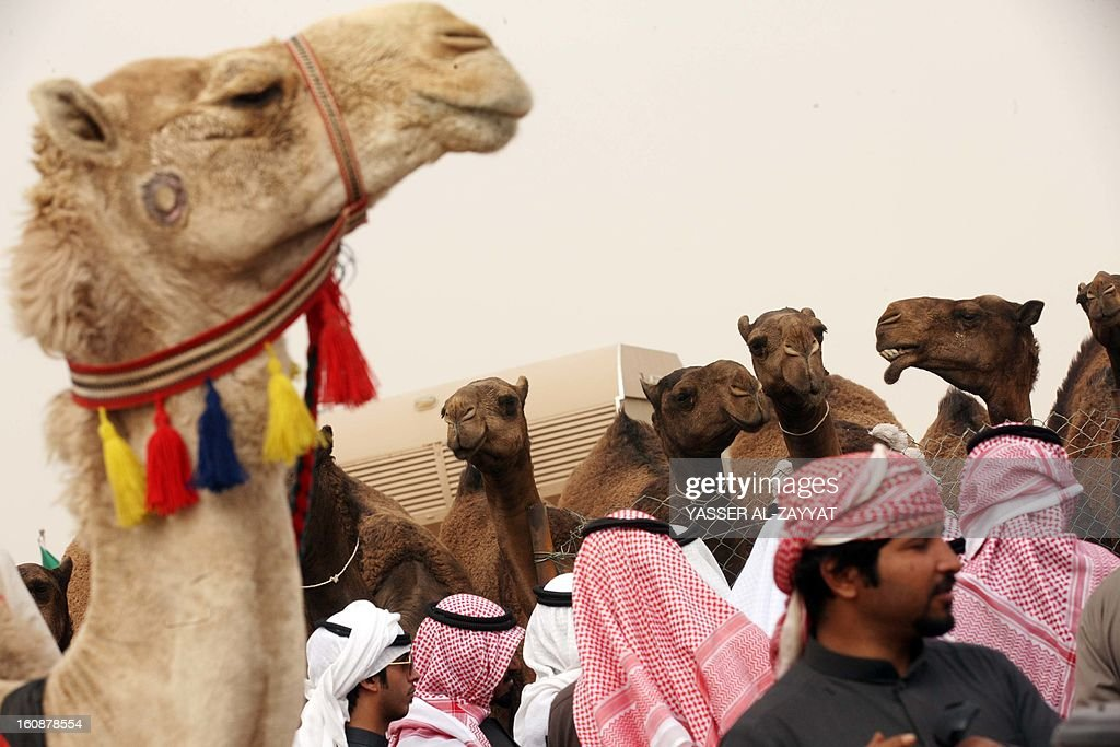 Kuwaiti men stand near camels during a competition in al-Salmi district, a desert area 120 kms west of Kuwait City, on February 7, 2013, held as part of the ongoing Popular Heritage Festival. The one-month event is held annually to commemorate popular activities in Kuwaiti heritage, featuring camel races, falcons contests, fishing competitions and others.
